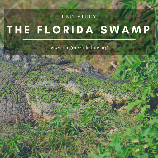 Florida Swamp (1).png