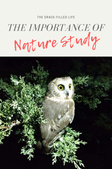 A Charlotte Mason Homeschool Education: The Importance of Nature Study