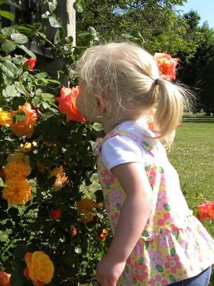 000visit a public garden