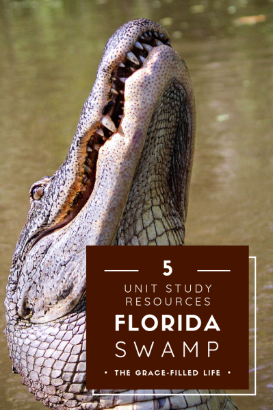 Five amazing resources for a homeschool unit study on the Florida swamp ecosystem.