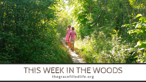 this week in the woods_ the near north (2)