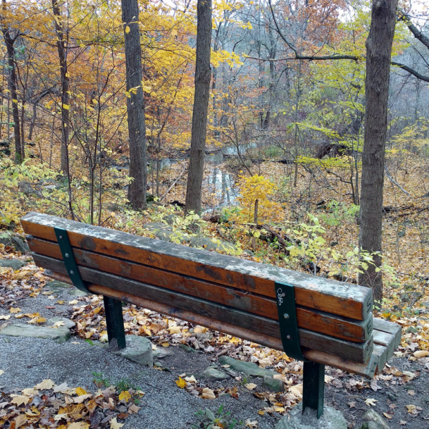 Autumn scene with bench.png